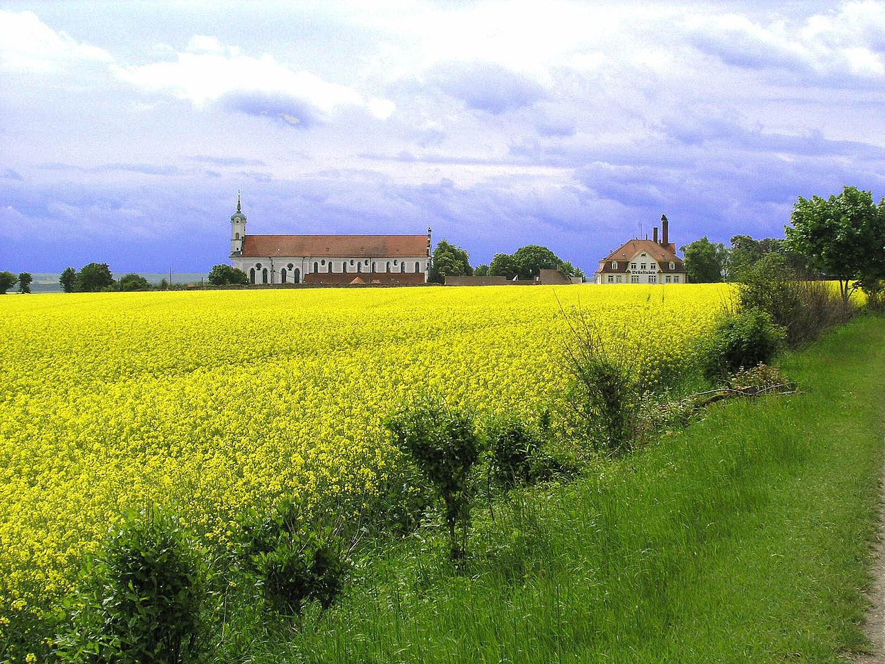 Kloster Elchingen Und Rapsfeld