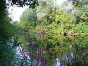 1280px-Dunajské_luhy_8_July_2007